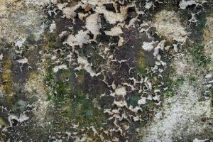Плесень и грибок от залива ущерб
